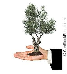 regalo, mano, agricoltura, olivo