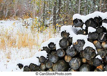 registrare, mucchio, foresta, coperto, neve