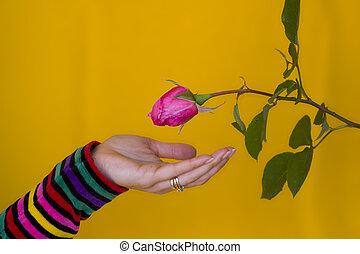 ricevimento, fiore
