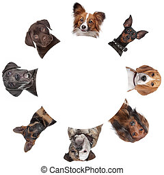ritratti, cerchio, gruppo, intorno, cane