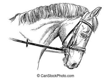 ritratto, briglia, cavallo