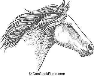 ritratto, cavallo, bianco, schizzo, matita