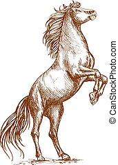 ritratto, cavallo, cerva, allevamento, zoccolo, schizzo, marrone