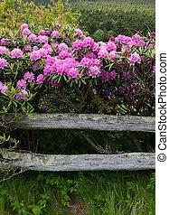 rododendro, recinto sbarra