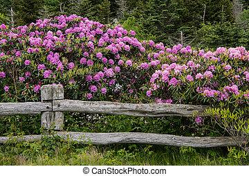 rododendro, rotaia, coperta, recinto