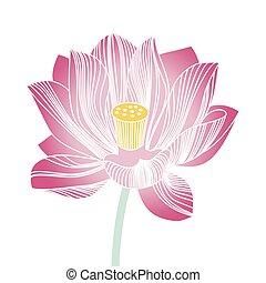 rosa, acqua, fiore fiorente, bello, loto, stilizzato, bianco, fondo., lily.