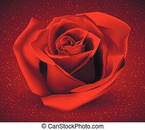 rosa, brillante rosso, fondo