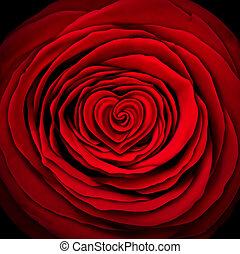 rosa, concetto, amore