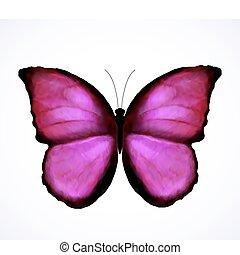 rosa, farfalla, luminoso, vettore, isolated.