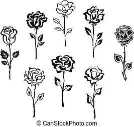rosa, fiori, set