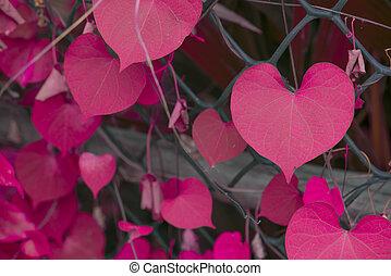 rosa, forma cuore, colorare, foglia