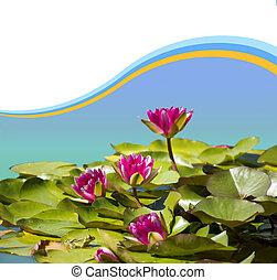 rosa, immagine, waterlilies, disegno, fondo, stagno, .flowers