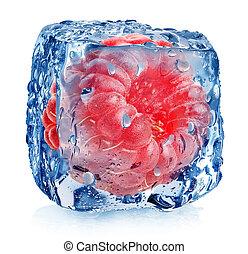 rosa, lampone, ghiaccio
