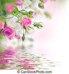 rosa, mazzolino, fondo., roses., floreale, bianco