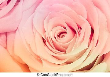 rosa, multicolor