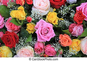 rosa, multicolor, disposizione