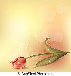 rosa, pastello, tulipano, fondo, luce