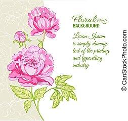 rosa, peonies, campione, fondo, testo