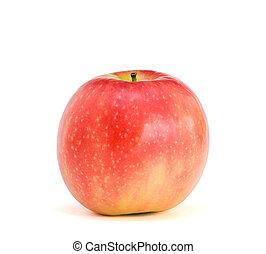 rosa, solitario, signora, mela