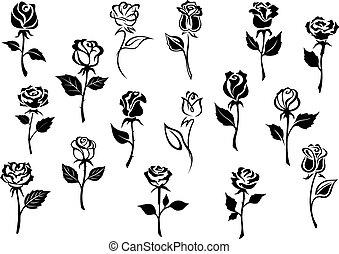 rose, fiori bianchi, nero
