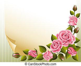 rose, fondo
