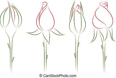 rosebuds., illustration., vettore