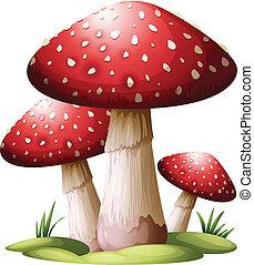 rosso, fungo
