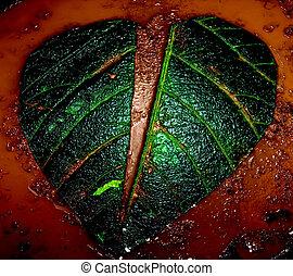 rotto, forma, leaf., cuore