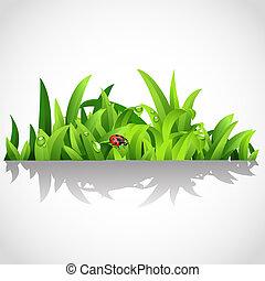 rugiada, lussureggiante, erba, verde