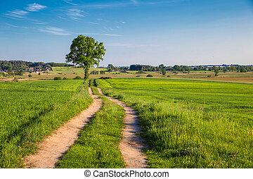 rurale, singolo, albero, road., paesaggio