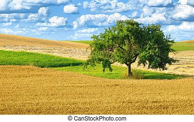 rurale, singolo, paesaggio albero, colorito