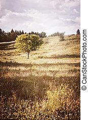 rurale, singolo, paesaggio albero