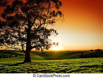 rurale, tramonto