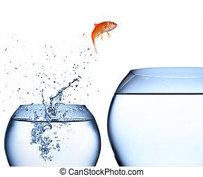saltare, acqua, fuori, pesce rosso