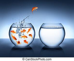 saltare, miglioramento, -, pesce rosso