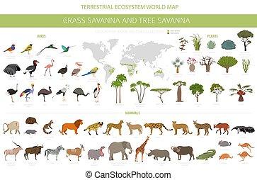savana, set, regione, vegetations, albero, ecosistema, biome, uccelli, infographic., erba, prarie, terreno boscoso, animali, disegno, pampa., prateria, savana, naturale