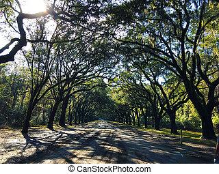 savana, stati uniti, strada, georgia, albero quercia, piantagione, forma, arco, wormsloe, storico, foderare