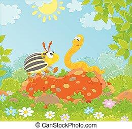 scarabeo, verme, colorado