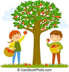 scegliere, bambini, mele