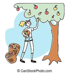 scegliere, giardiniere, mele, femmina