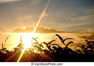 scenario, campo, tramonto