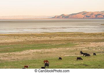 scenico, outback, oregon