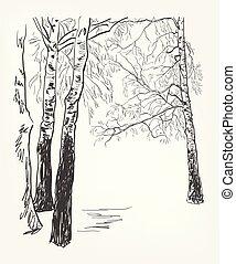 schizzo, albero, acquarello, vettore, fondo, betulla, linea