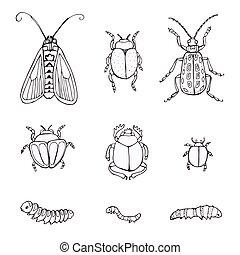 schizzo, set, insetti, scarabocchiare, insects., hand-drawn