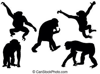 scimmia, silhouette, collezione