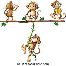 scimmie, oscillazione