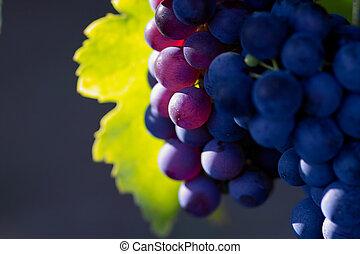 scuro, ardendo, uva, vino