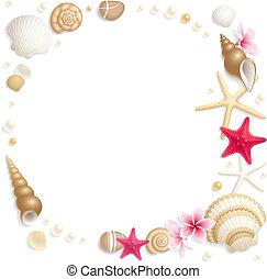 seashell, cornice