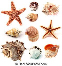 seashells, starfish, set