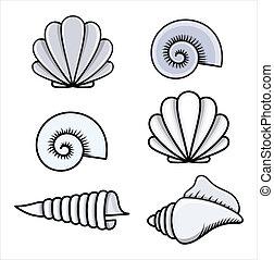 seashells, vettore, -, cartone animato